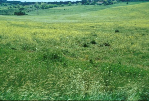 Area 1043: il campo disseminato di frammenti fittili