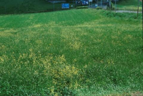 Area 1044: il terreno su cui si trova lo spargimento di frammenti fittili