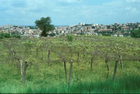 Area 1048: la vigna dove la Carta dell'Agro segnala la presenza dei frammenti fittili