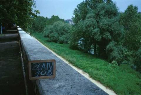 Area 105: la folta vegetazione che non permette di individuare i resti della banchina
