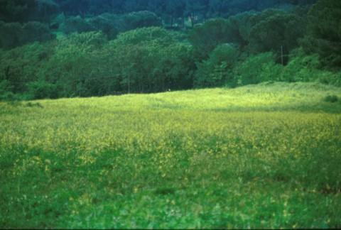 Area 1050: il terreno dove la Carta dell'Agro segnala la presenza di un'area di frammenti fitti
