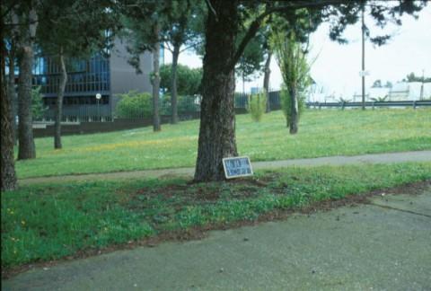 Area 1071: i giardini adiacenti a via Tor Tre Teste