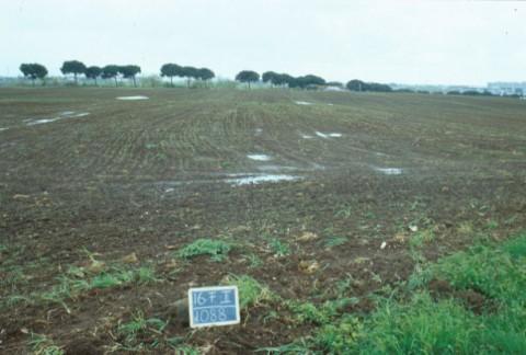 Area 1088: il terreno di proprietà dell'ACEA