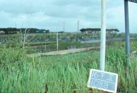 Area 1089: il terreno su cui è stata impiantata la vigna
