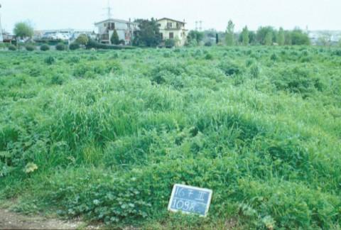 Area 1098: il terreno dove la Carta dell'Agro segnala la presenza di una necropoli