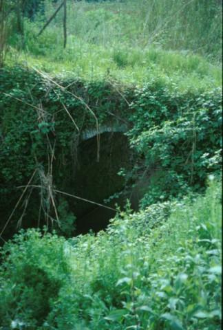 Area 1125: il ponte coperto da fitta vegetazione