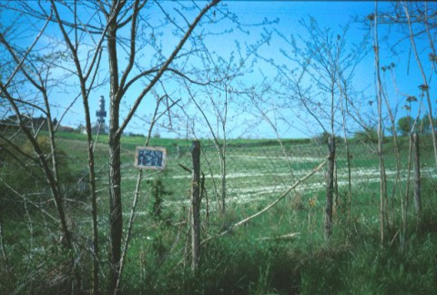 Area 131: il terreno sul quale dovrebbero insistere i resti della villa romana