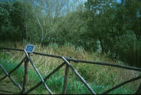 Area 1315: la vegetazione che interessa la zona dove la Carta dell'Agro segnala resti di muratura