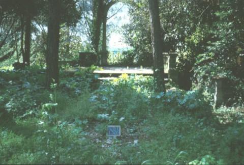 Area 1326: il belvedere che si affaccia ad O verso il fosso dell'Acqua Traversa