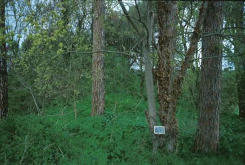 Area 132: la zona, ai piedi del poggio, dove si trova il blocco B