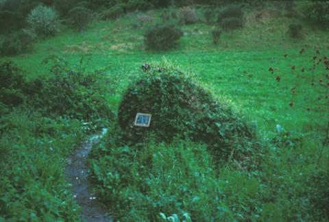 Area 132: il blocco A ricoperto da rovi e folta vegetazione