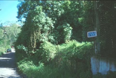 Area 1335: la folta boscaglia che interessa la zona segnalata dalla Carta dell'Agro