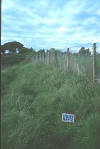 Area 1336: la fitta vegetazione che interessa l'area segnalata dalla Carta dell'Agro per la presenza di grotte