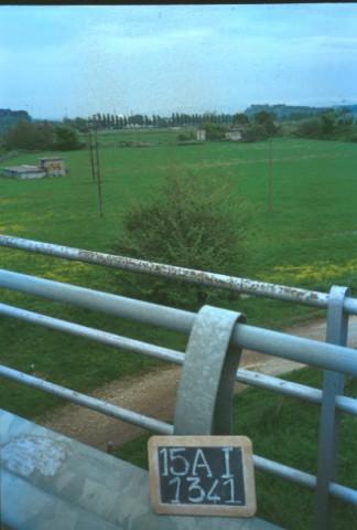 Area 1341: il terreno su cui dovrebbe insistere il tratto basolato pertinente al tracciato dell'antica via Flaminia