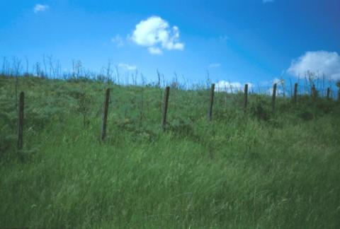 Area 1349: il terreno segnalato dalla Carta dell'Agro per la presenza di frammenti fittili