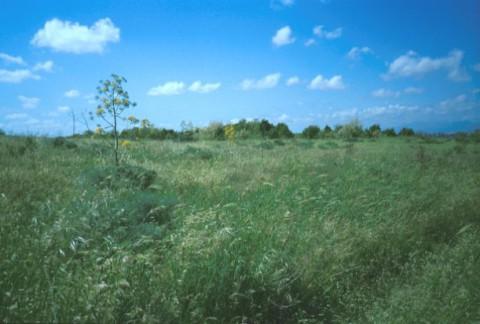 Area 1350: il terreno dove la Carta dell'Agro segnala la presenza di un'area di frammenti fittili
