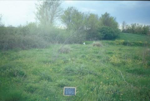 Area 1352: la fitta vegetazione che interessa la zona