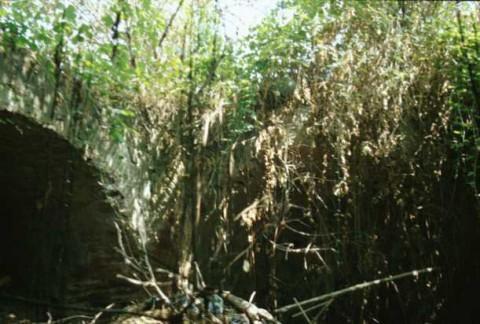 Area 3651: il terreno incolto entro il quale si trovano i resti del sepolcro