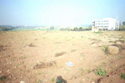 Area 4014: il terreno dove è stata individuata l'area di frammenti fittili