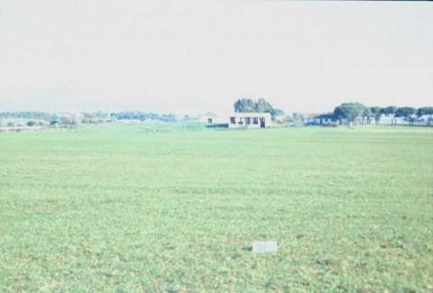 Area 4465: il terreno dove è stata individuata una concentrazione di frammenti fittili