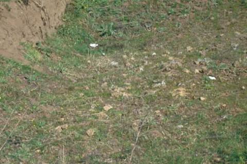 Area 4753: l'interno della trincea dove si è individuato del materiale tufaceo