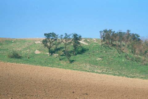 Area 5268: i resti pertinenti alla villa di età romana visibili da via Polense